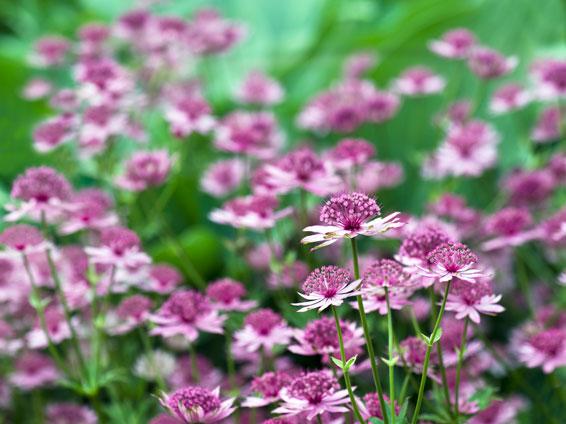 Super Vaste planten - Soorten vaste planten - Groengeert LI55