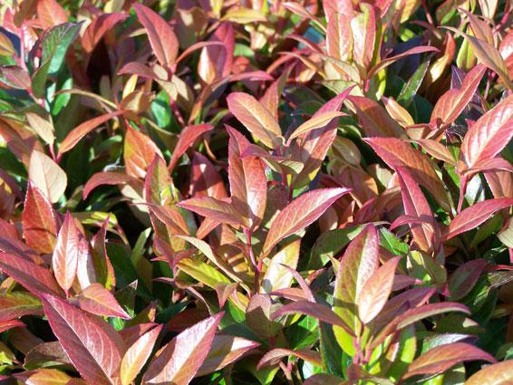 planten bodembedekkers zon