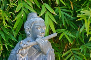 Voorbeeld woekerende bamboe