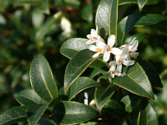 Tuin Hagen Soorten : Haagplanten soorten haagplanten groengeert