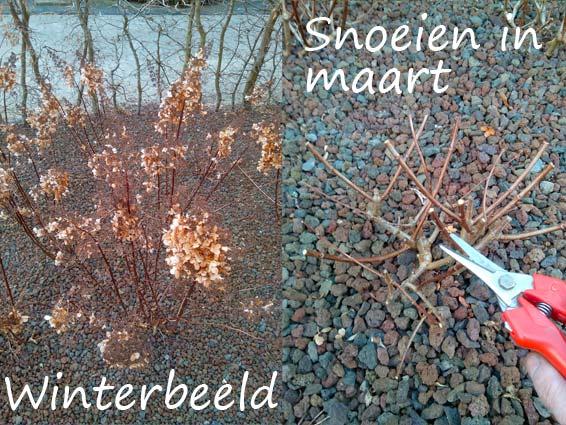 Snoeitips voor siergrassen en hortensia 39 s in jouw tuin for Tuin snoeien