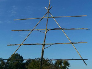 Leilinde (linde geleid op frame - winterbeeld)